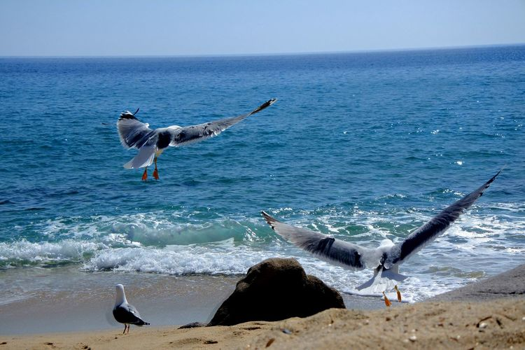 C'mon! Seagull ın Flıght Seascape Beach Photography Seagulls And Sea Beach Beauty In Nature Blue Open Wings Italy Water Wave Sea Beach Flying Sand Bird Motion Sky Horizon Over Water Coast My Best Photo