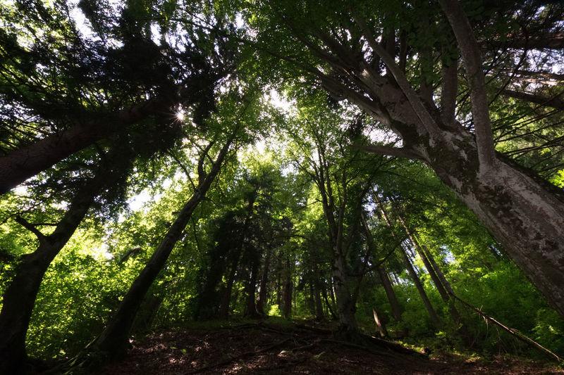 Wald Tree Plant