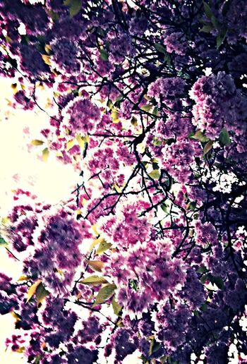 In spring the blossoms beautiful ^_^ Taking Photos Blossom Blossoms  Paper Rain