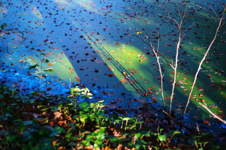 Swamp Outdoors Nature Swamp Forest Multi Colored No People Close-up Freshness Green Landscape Landscape_photography Landscape_Collection Nature Full Frame Blue Branches Covering Water Forestphotography Nikond750 Sun Shadow Trees EyeEm Best Shots Eye4photography