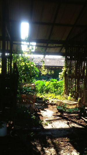 No People Indoors  Plant Green Color Lighting Equipment Tree Illuminated Growth Nature Architecture Greenhouse Forgotten Places  Forgotten Times Forgotten Memories