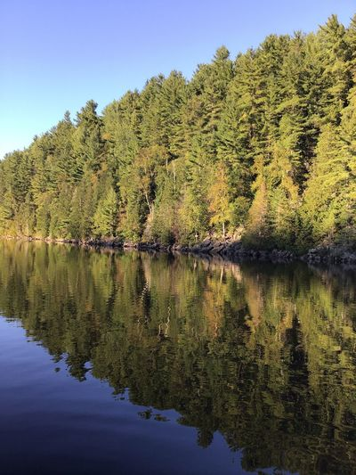 Forêt mixte laurentienne - Laurentian Mixed Forest (Lac Jackson) Reflection Water Sky Plant Tree Tranquility Beauty In Nature Lake Nature Tranquil Scene Scenics - Nature Outdoors Idyllic Clear Sky