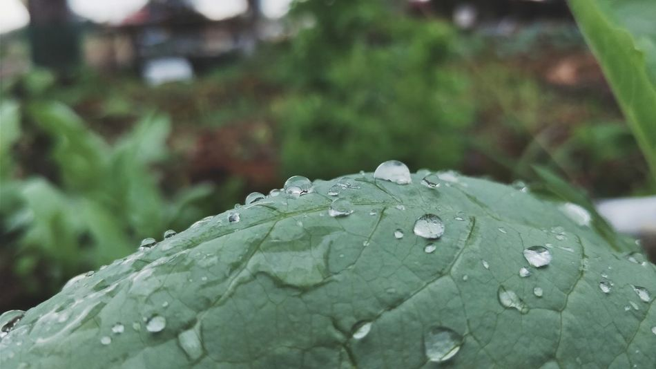 water on leaf Water On Leaf Leaf Drop Nature Close-up Water Day No People Focus On Foreground Green Color RainDrop Beauty In Nature Plant