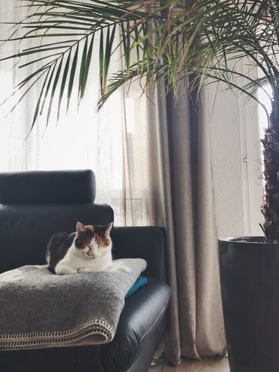 Feline Cat Pets