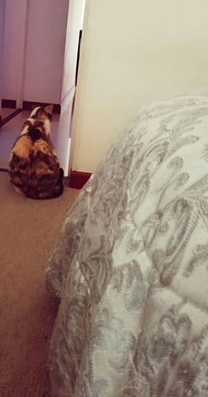 Gatita Bedroom Bed Home Interior Cat Stray Animal Tabby Domestic Animals Pet Bed Kitten At Home Feline
