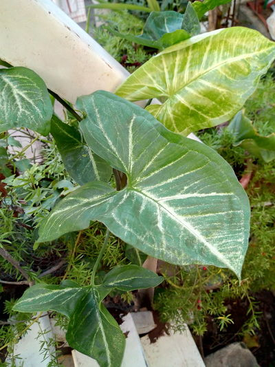 EyeEmNewHere EyeEm Selects Plants 🌱 Green Color Green Plants 🌱 Leaf Spider Web High Angle View Close-up Plant Green Color