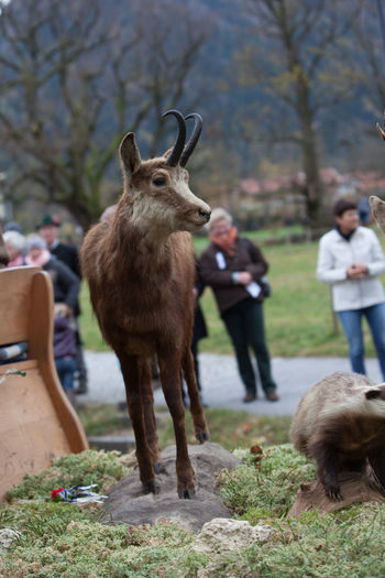 Schliersee, Bavaria - November 5, 2017: Every year on the 1st Sunday in November, the Idyllic Horse procession, named Leonhardi in Bavarian Schliersee takes place in commemoration of Patron St. Leonhard. In traditional clothing and decorated horse-drawn carriages horses and riders move to the church of St. Leonhard Autumn Bavaria Church Leonhard Ride Leonhardi Patron St. Leonhard Schliersee Stuffed Cart Chamois Decoration Domestic Animals Focus On Foreground Horse Horse Carts Horse Procession Idyllic Lifestyles Livestock Nature One Animal Outdoors Tourism Wild Wildlife