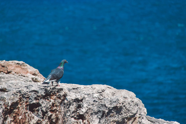 Close-up of bird perching on rock by water