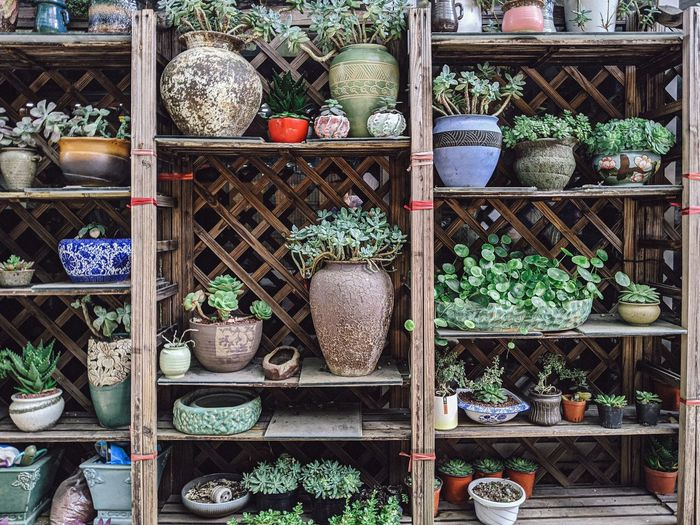 Potted plants for sale on shelf at market stall