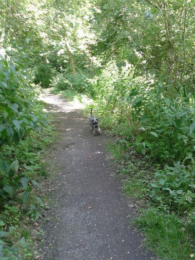 Unterwegsunddraußen im Wald in NRW, Deutschland. rocky senior ☆ Run Run Run Hunderunde Tierliebe Dogs Of EyeEm Waldweg
