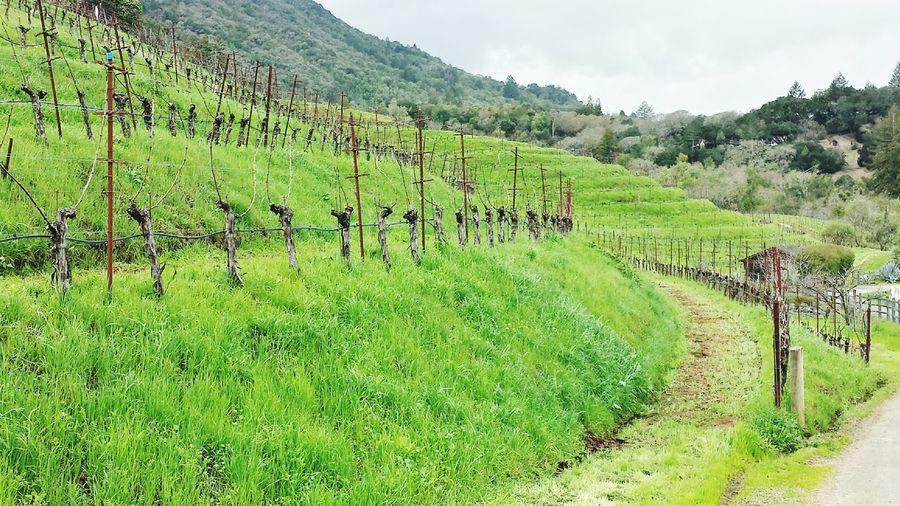 Benzinger Winery Sonoma Wine Country