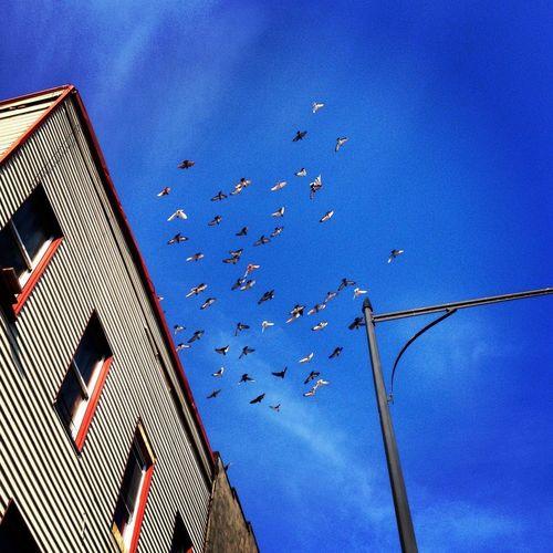Bushwick Bird Call