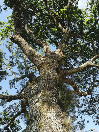 Onetree High Angle View High Hojas Y Ramas Low Angle View Nature Gogreen Tree Green Green Green!