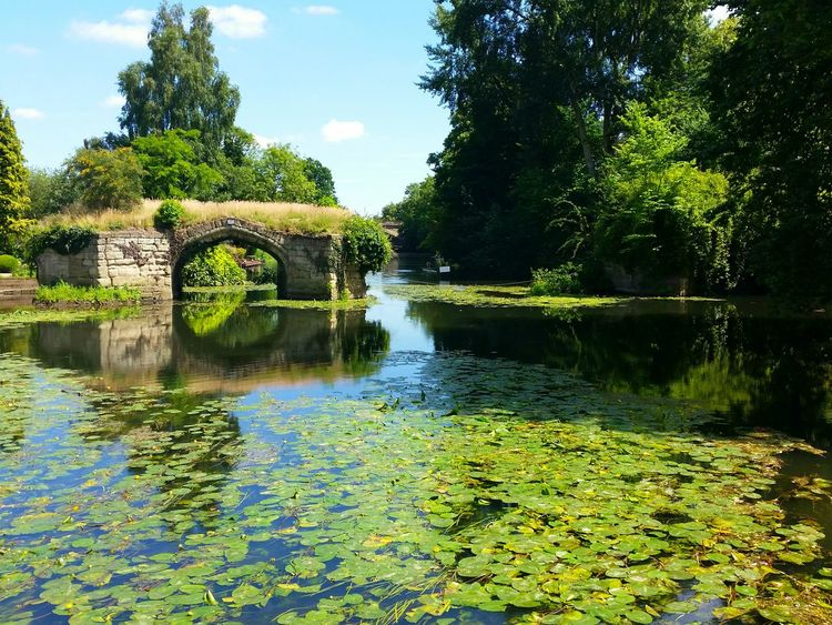 River Avon at Warwick Castle Reflection Water Tree Nature Sky Green Color Day Water Lilly Flowers Bridge Trees Forest Bushes River Romantic Relaxing Time Relaxing Moments Tranquility Countryside Water Reflections Riverside Ruined Bridge Ruined Architecture Lush Green NOstress