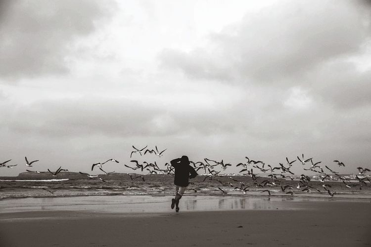 Beach Full Length Sea One Man Only One Person Only Men Reflection Silhouette Sky Sand Horizon Over Water Tranquility Moment Of Silence Lanscape Freedom Birds Blackandwhite EyeEm Selects Nature_ Collection  Breathing Space
