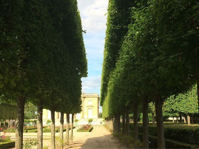 Paris, France  Château De Versailles  Versailles Palace Versailles Petit Trianon Tree The Way Forward Growth Day Green Color Outdoors No People Architecture Sky Nature Built Structure Walkway Grass City