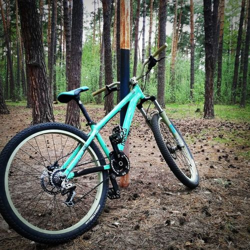 Bicycle on tree trunk in forest