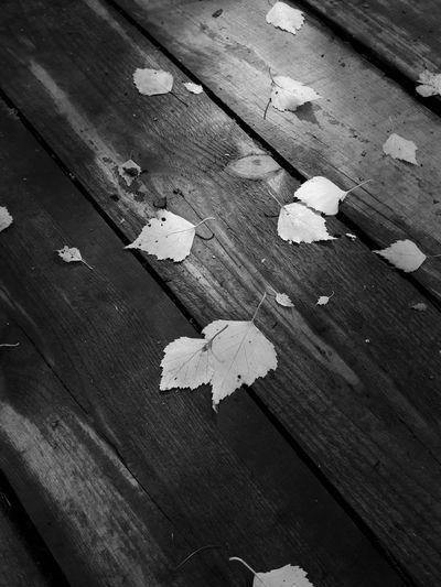 Leaf Change