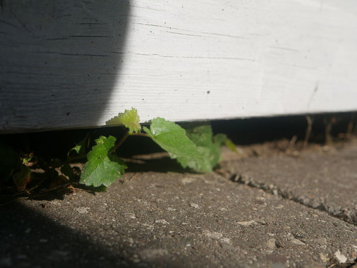 Close-up of plant against wall