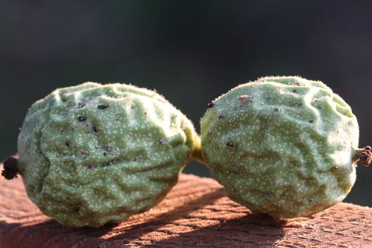 Green walnuts as a duo in the sunshine Premium Collection EyeEm Premium Collection Nature_collection Naturelovers Garden EyeEm Nature Lover EyeEm Gallery Beauty In Nature Nature Photography EyeEm Best Shots EyeEmBestPics Eyeembestshots-nature Walnut Walnuts Duo Sunshine Sunshine Day Macro Macro Photography Macro_collection Close-up Focus On Foreground Food Green Color Nature No People Sunlight Two Objects Plant Life EyeEmNewHere