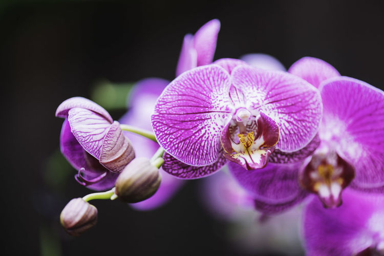 Close-Up Of Purple Orchid Blooming Outdoors