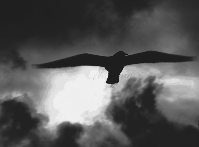 Keep Fly 💫 Artpik Flying Sky That's Me Memories First Eyeem Photo Darkphotography Conceptual Photography  France Photoart Art Looking Into The Future EyeEm Love Blackandwhite .