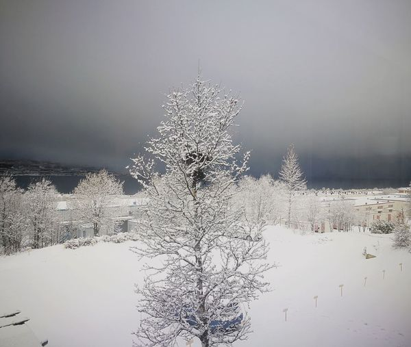 A tree in the snow Winter Cold Temperature Nature Northern Norway Tromsø Dark Times Ahead