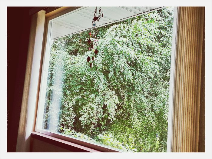 The View From My Window I get to enjoy watching the birds in this Aspen tree from the livingroom picture window. KimberlyJTilley