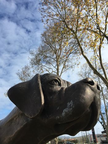 Sky Tree Low Angle View Statue Sculpture No People Cloud - Sky Outdoors Day Animal Themes Close-up Nature Mammal