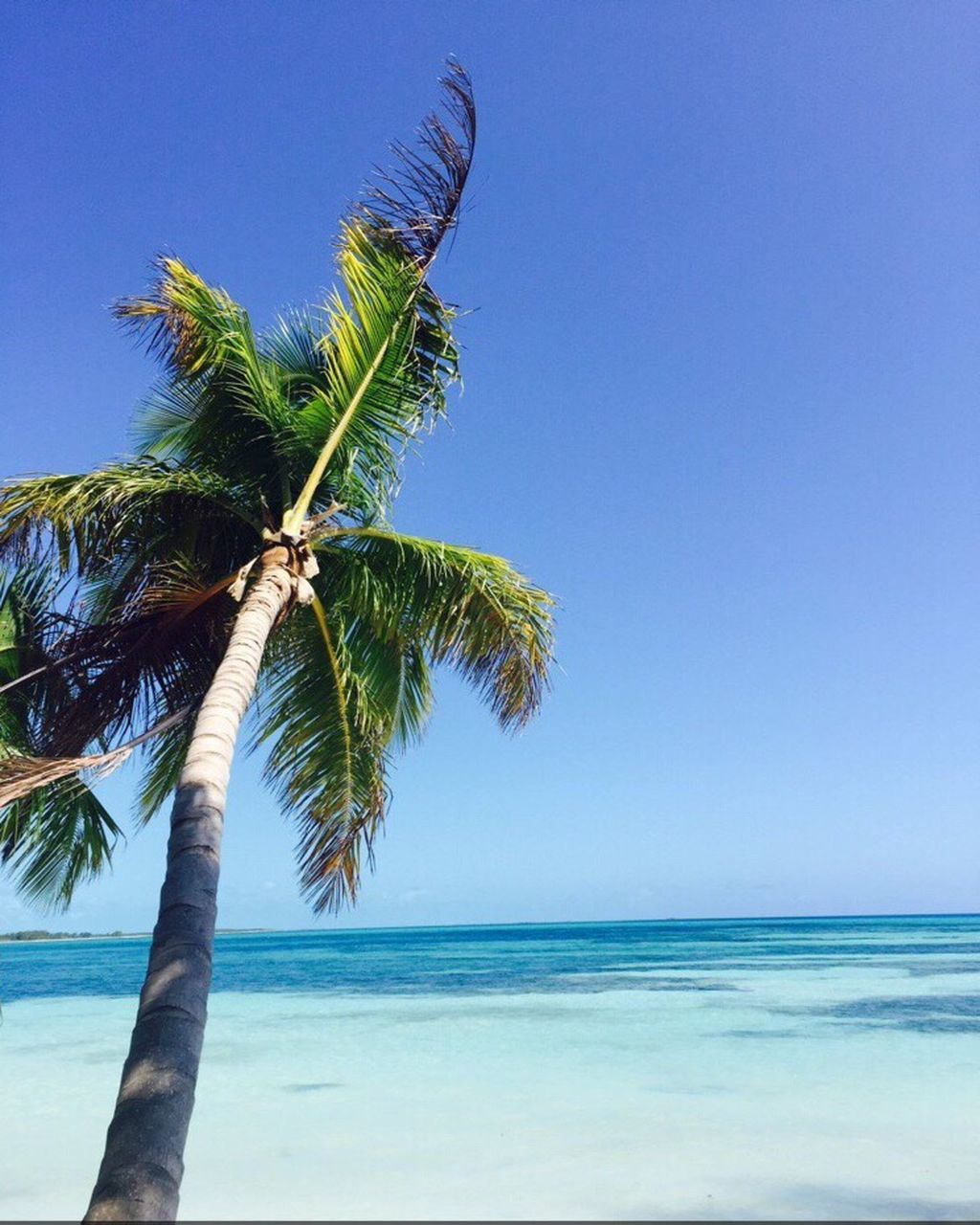 sea, palm tree, tree, nature, beauty in nature, scenics, tranquil scene, horizon over water, blue, clear sky, tranquility, beach, tree trunk, water, sky, outdoors, day, no people, growth