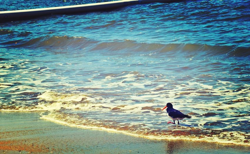 Bird Flying Bird Beach Beach Bird Kewarra Beach Wanderlust