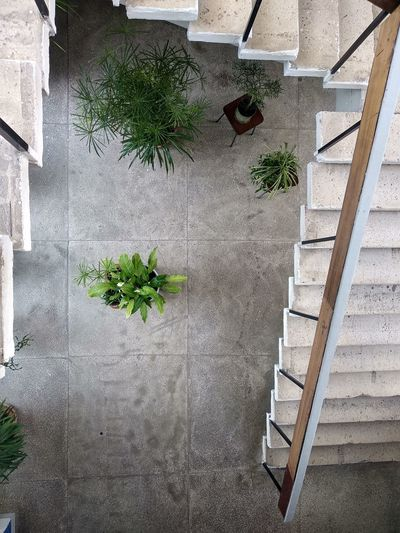 High angle view of potted plants on staircase