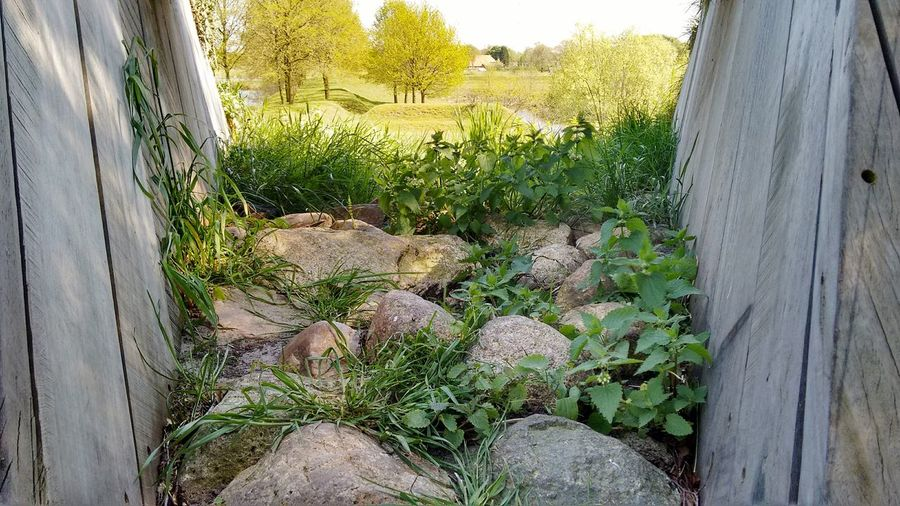 Showcase May Beautiful Nature Nature_collection Eyem Nature Lovers  Plants Spring Flowers,Plants & Garden No Filter, No Edit, Just Photography Nature Stones Stones And Plants Landscape Trees No People Tunnel View