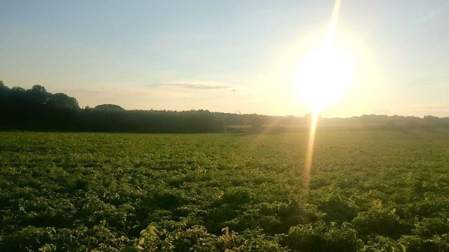 Sun Sunset Sonnenuntergang