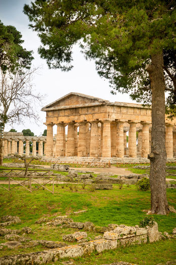 Italy Paestum Plant Tree Architecture History The Past Architectural Column Built Structure Travel Destinations Nature Ancient Day Travel Grass Old Ruin Old Tourism Sky Building Exterior No People Religion Ancient Civilization Outdoors Archaeology Ruined Place Of Worship