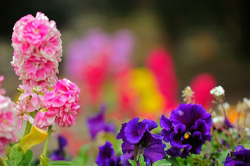EyeEm Flower Flower Collection Fleshyplants Bokeh Colorful Flowers Spring Time Colors 春 Spring Spring Colours EyeEm Nature Lover
