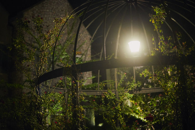 Garden Flowers Green Garden Lowlight Cage Garden Light And Shadow Light Bulb Roses