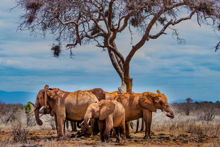 View of elephants under a tree  on field against sky