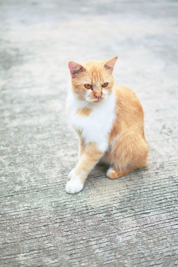 Ginger cat. Worldcatday Worldcatsday Ginger Cat Tabby Tail Tabby Cat Whisker