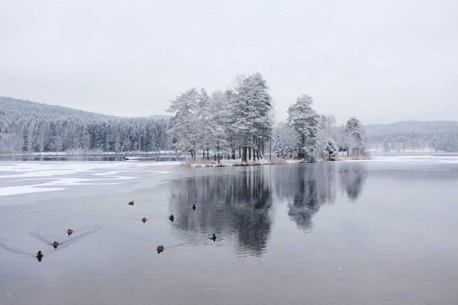 EyeEm Selects Cold Temperature Winter Nature Water Tree Beauty In Nature Lake Frozen Outdoors Bird Animal Themes Animals In The Wild Snow No People Tranquility Scenics Tranquil Scene Day Large Group Of Animals Clear Sky