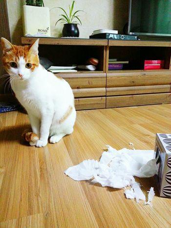 Cat Catstagram Troublemaker