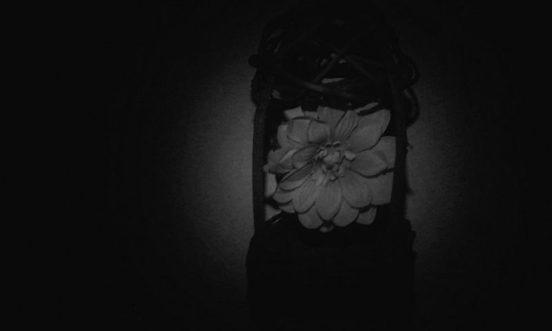 Mystery Shadow Blackandwhite Blanco Y Negro Flowers Shadows & Lights Black And White Blanco & Negro