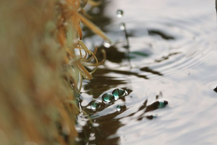 Water Nature No People Close-up Animal Themes Outdoors Day Swimming Beauty In Nature Water Drops Dried Grass Animal Wildlife Animals In The Wild Animal One Animal Reptile Alligator Bird EyeEm Eyeem India Taking Photos DSLR Photography