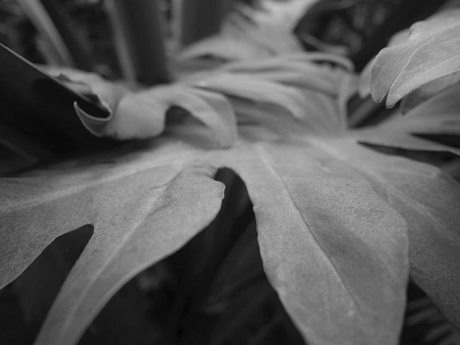Perceptions of Florimania, 2018. Fineartphotography Macro Steinhardtconservatory BrooklynBotanicGarden Perceptionsofflorimania Plants