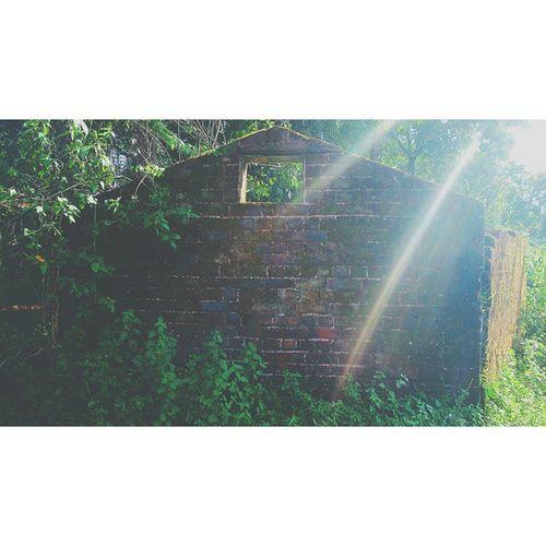 Abandoned Abandonedbuilding Abandonedplaces Abandon_seekers rcnocrop rays naturehippys naturegram green 16x9 instadaily igaddict igersworldwide nothingisordinary nofilter silhouette vscocam vscophile vscofiltre M3 gf_daily jj_abandoned XperiaSP Jabalpur