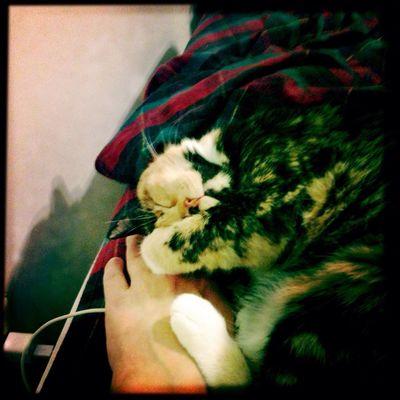 My cat chillin'. Cat Cats Calico Catsagram Calicocat Hipstamatic Cat♡