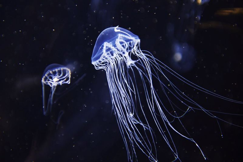 Light And Shadow EyeEm Best Shots Jellyfish Silhouette Aquarium