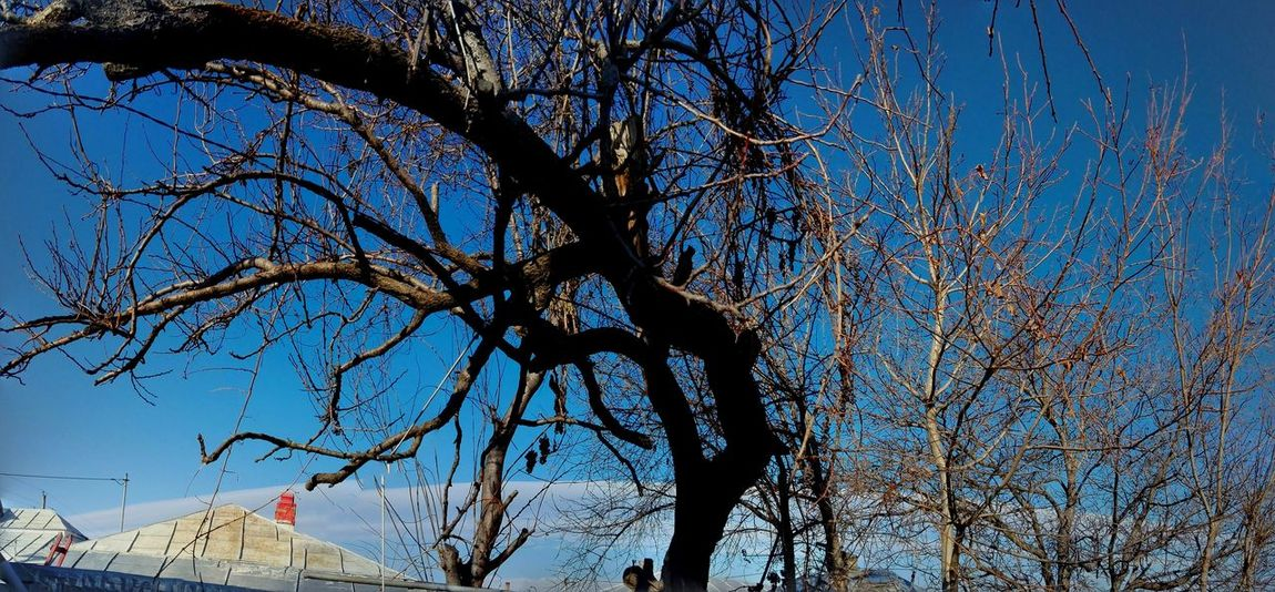 Outdoors Low Angle View Nature Blue Sky Tree Bare Tree Beauty In Nature Branch Eyeem Market On Market Veronicaionita @WOLFZUACHiV Edited By @wolfzuachis Wolfzuachiv Ionita Showcase: January Showcase: 2017 Huaweiphotography Beauty In Nature Panoramic Photography Panoramic Cloud - Sky Strange Tree EyeEmNewHere