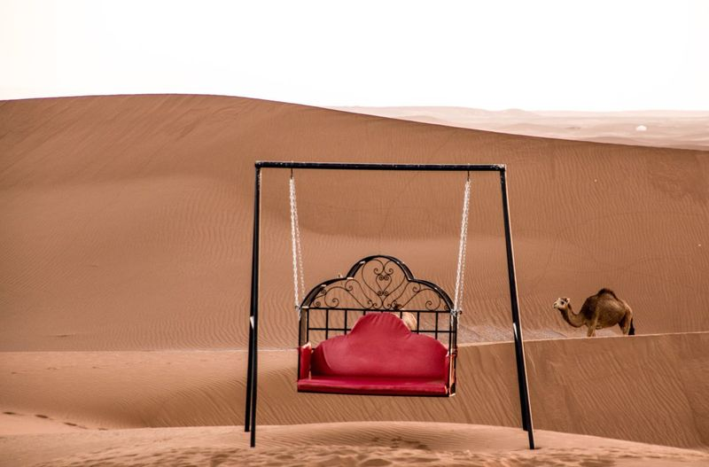 View of a hollywood swing in sahara desert  with a dromedar  camel passing by