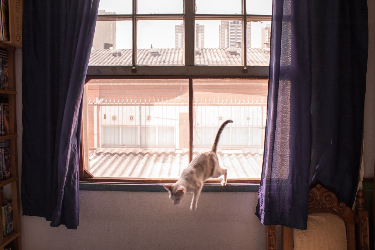 window, curtain, animal themes, one animal, domestic animals, indoors, mammal, pets, looking through window, window sill, home interior, drapes, domestic cat, feline, no people, day, cage, radiator, bird